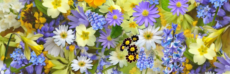 banner_garden4_1240x350